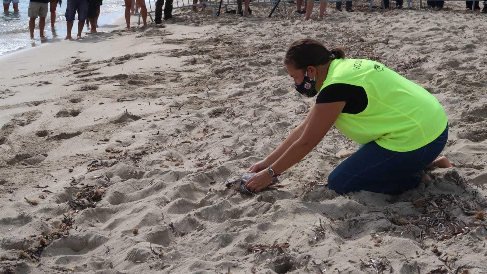 Personal del Servei de Protecció d'Espècies del Parc Natural de Ses Salines amollant una de les tortugues.
