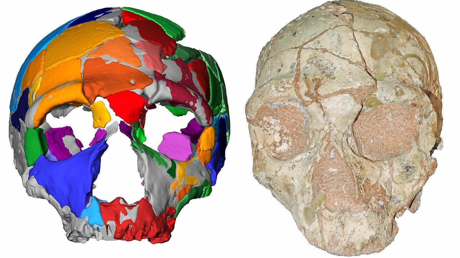 El crani 2 d'Apidima, atribuït a un neandertal,  I la seva reconstrucció digital.