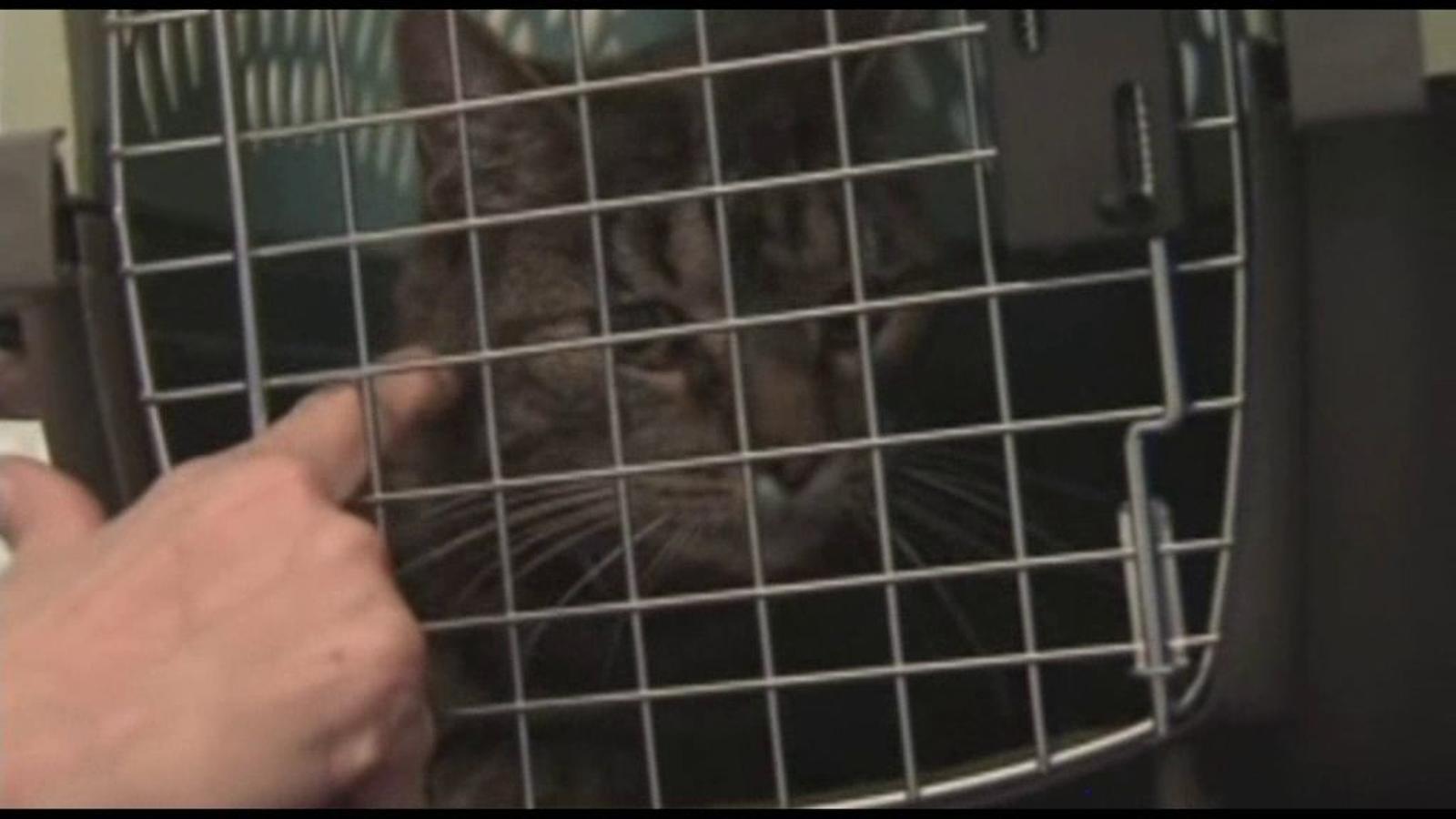 Ripples, el gat que va fer endarrerir 4 hores un vol al Canadà