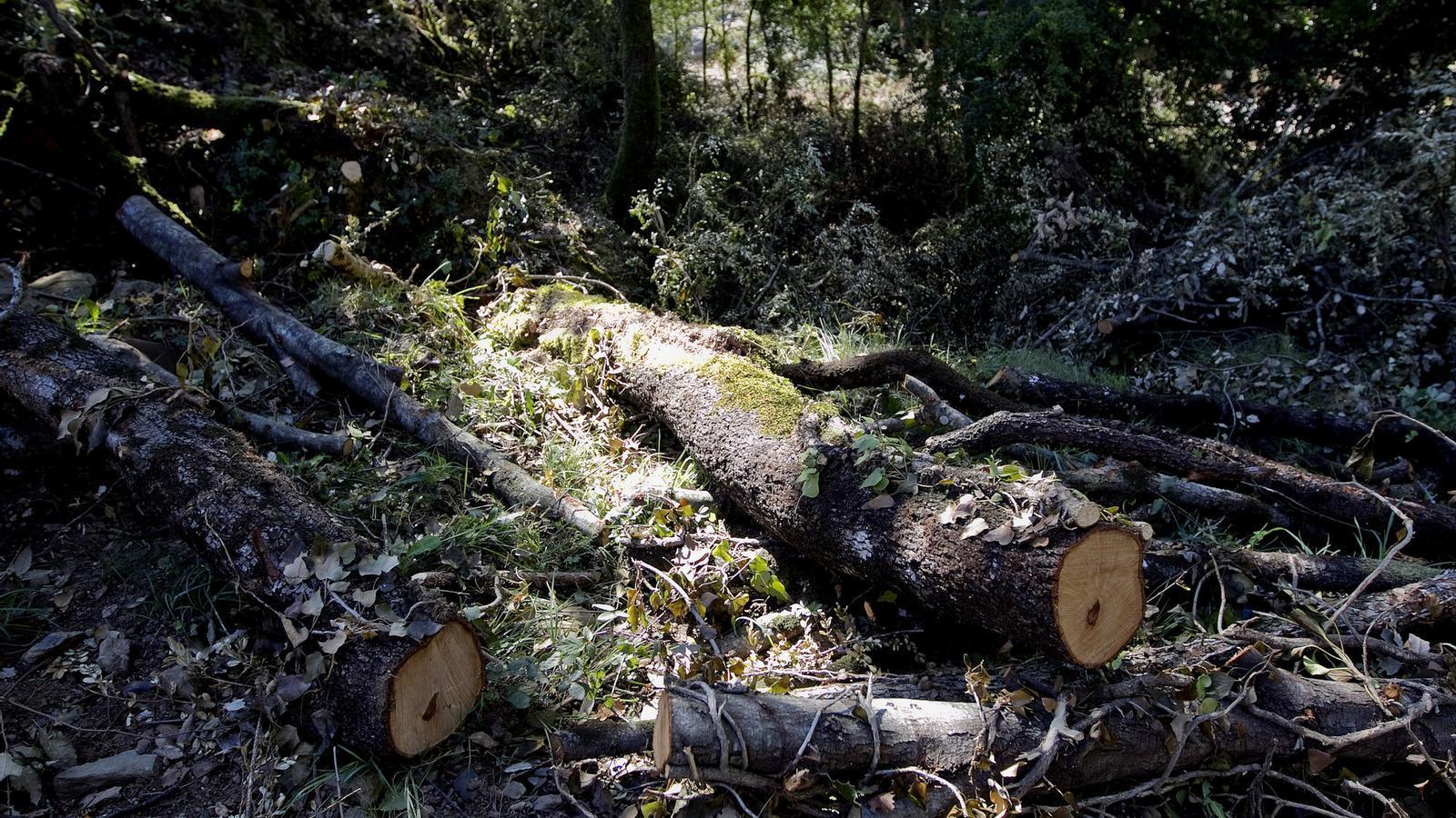 Una tona d'estella de fusta es cotitza actualment a un preu d'entre 60 i 70 euros. / PERE TORDERA