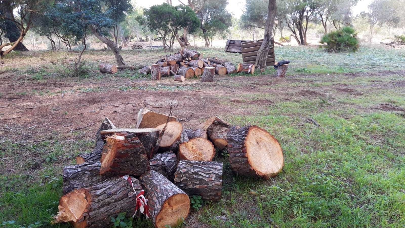 Espai desforestat per fer la nova zona d'acampada