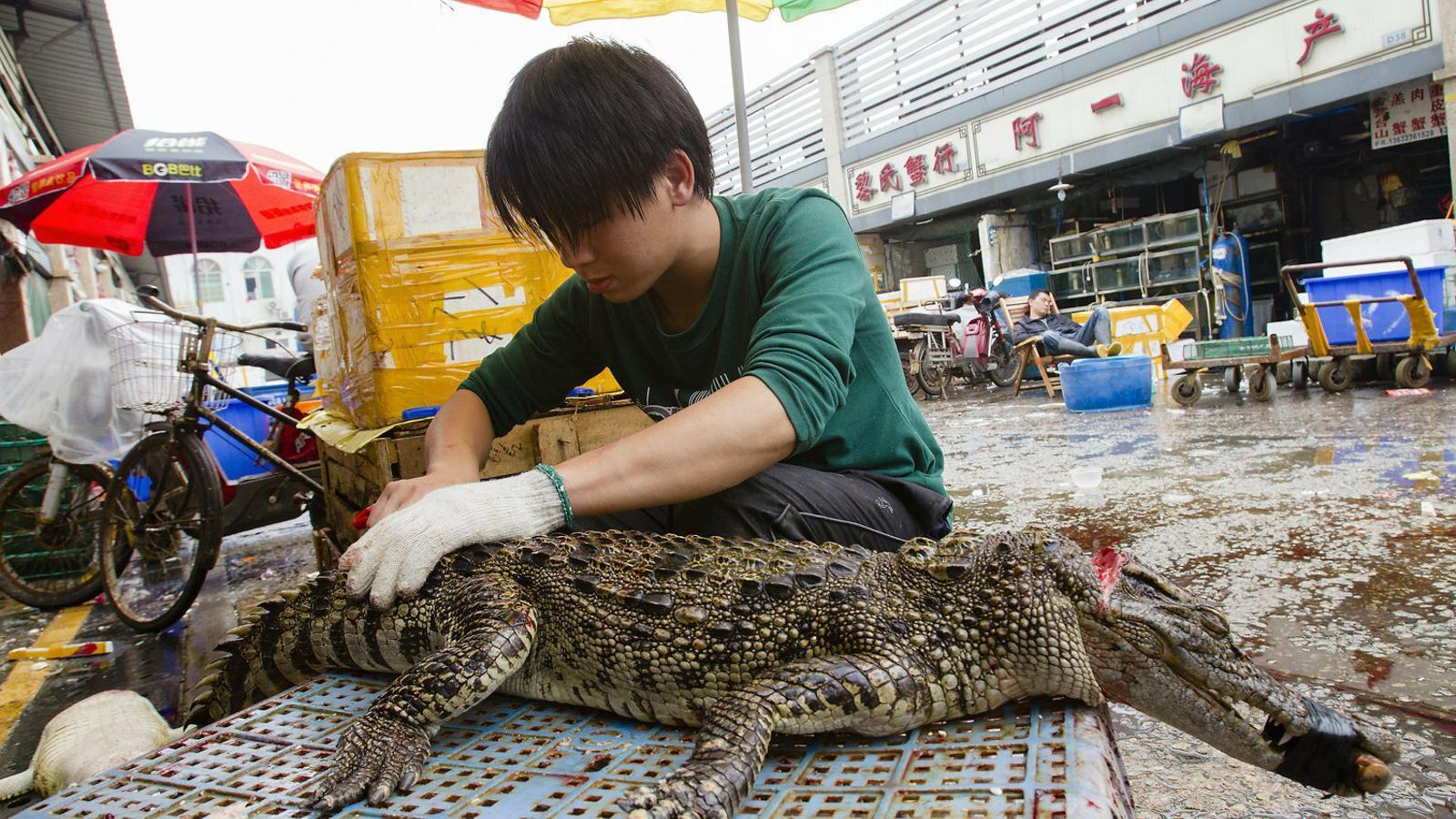 Mercats d'animals vius: focus de virus i de polèmica