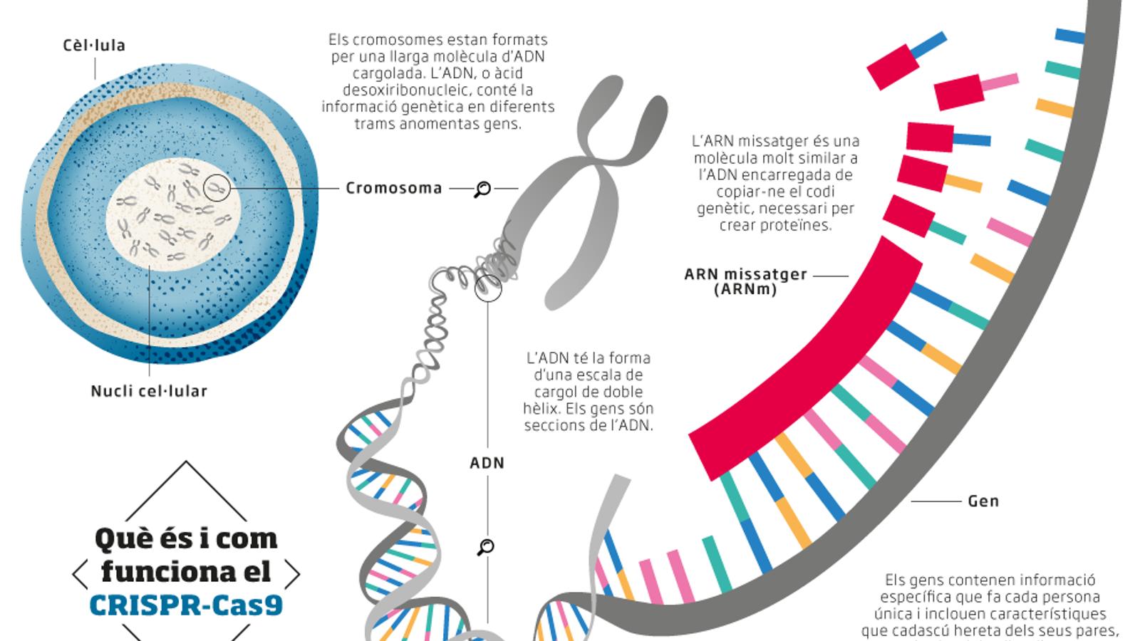 Preguntes i respostes sobre CRISPR