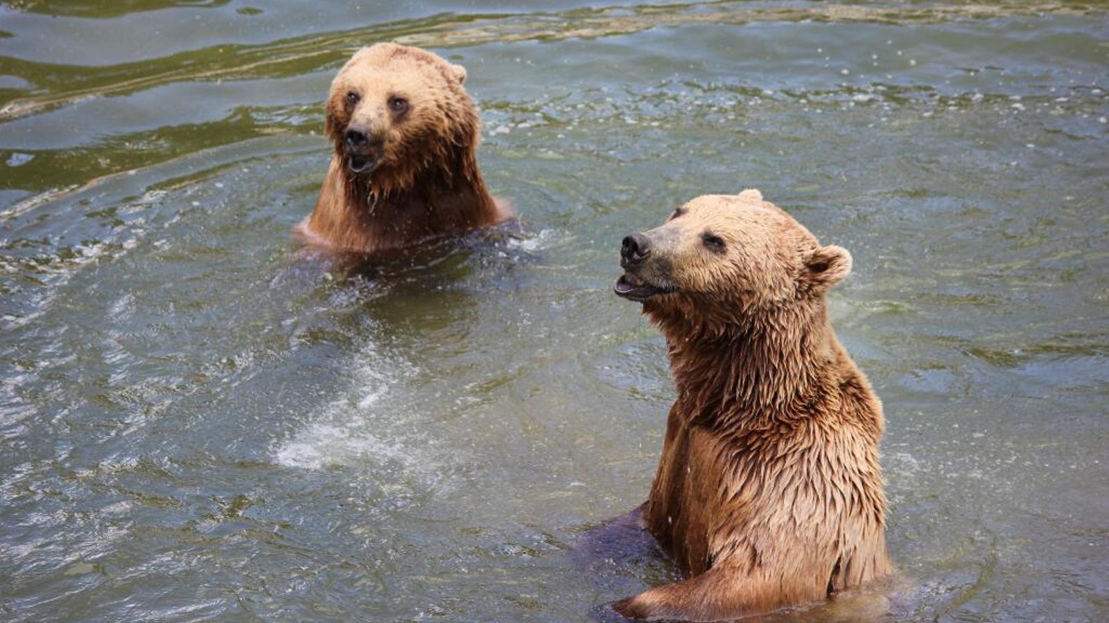 Dos ossos del parc d'animals de Naturlàndia en una imatge d'arxiu