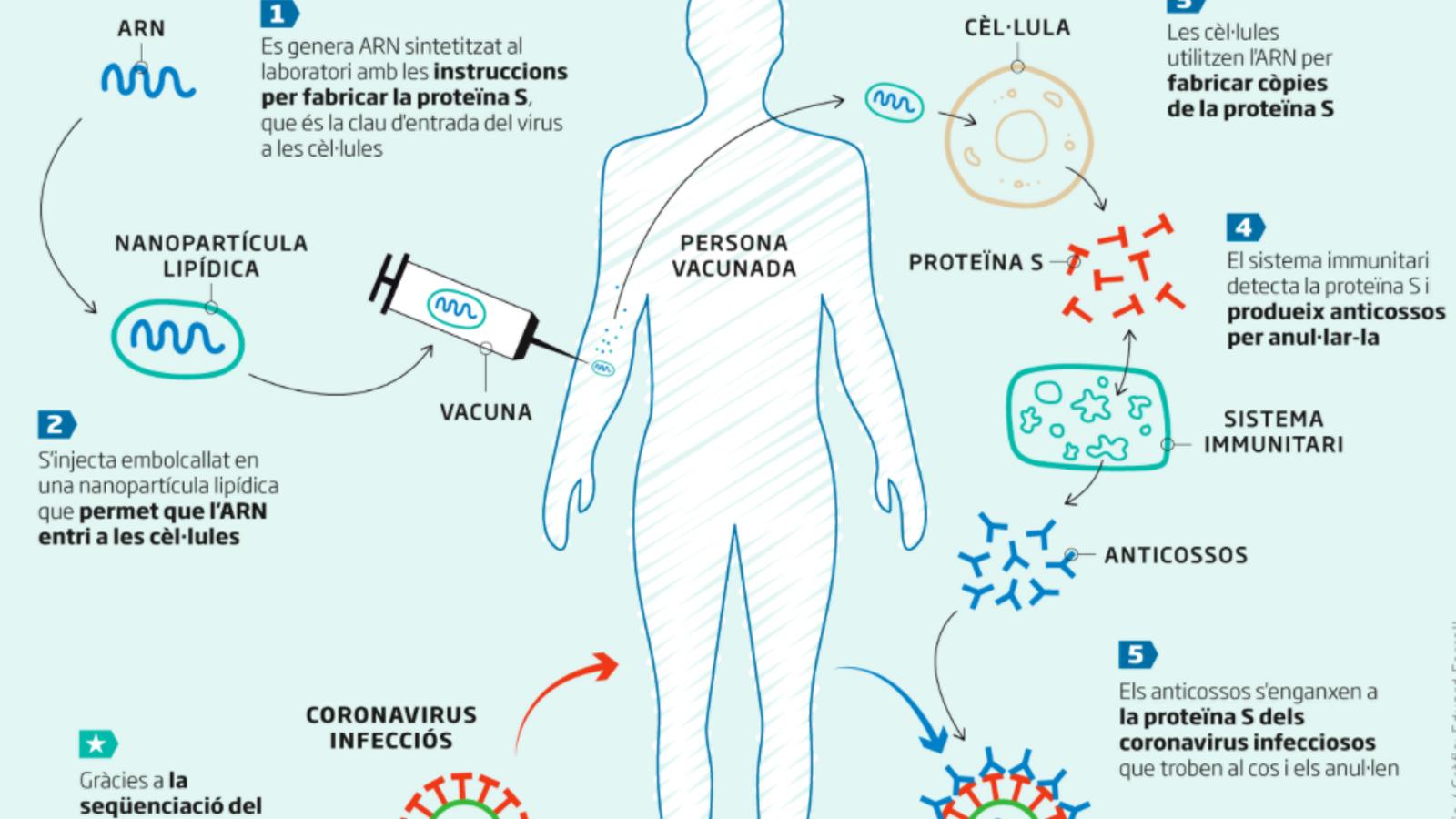 Optimisme prudent sobre la vacuna de Moderna