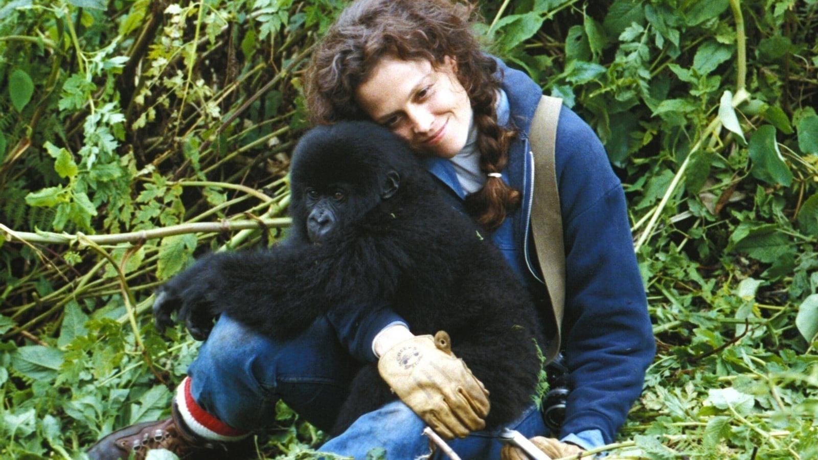 Fotograma de 'Goril·les en la boira'