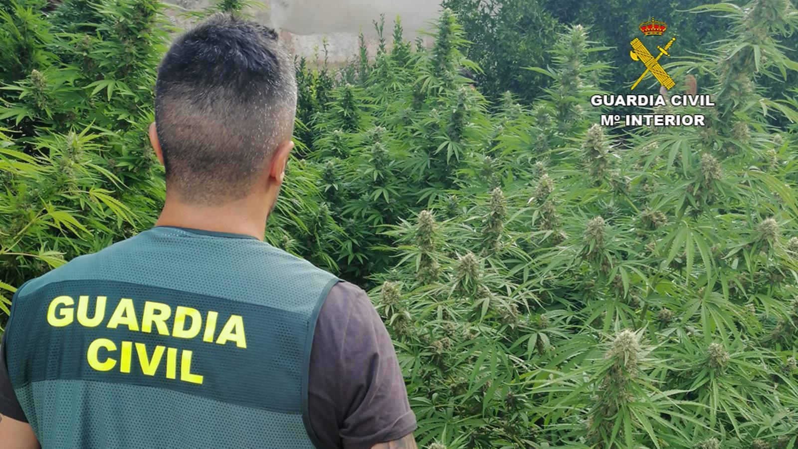 20191003 marihuana sineu