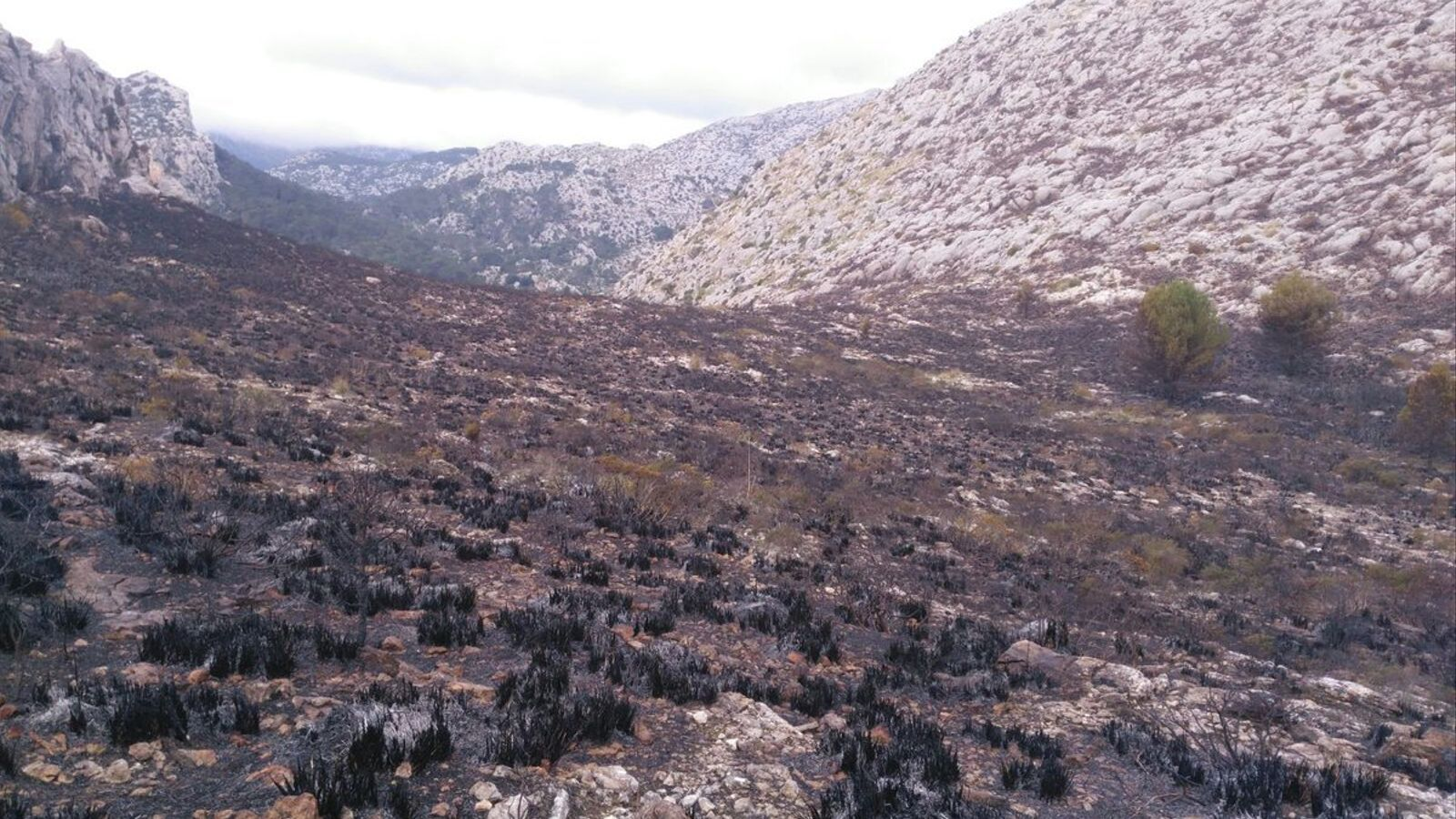 Extingit l'incendi forestal de Pollença després de cremar 17 hectàrees