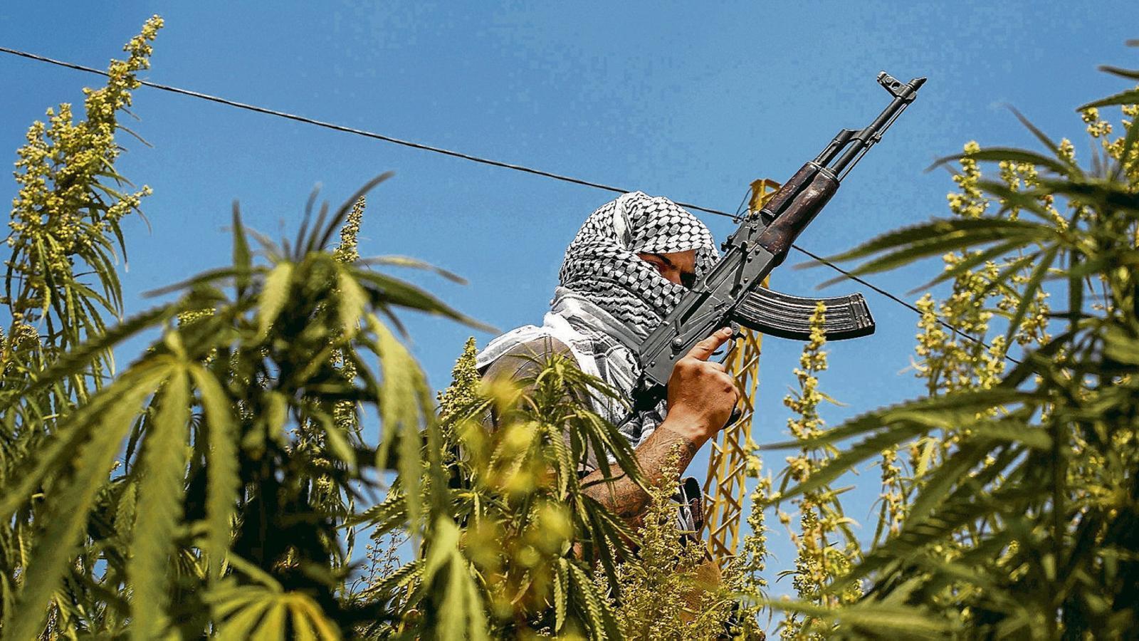 Marihuana en terres de Hezbol·lah