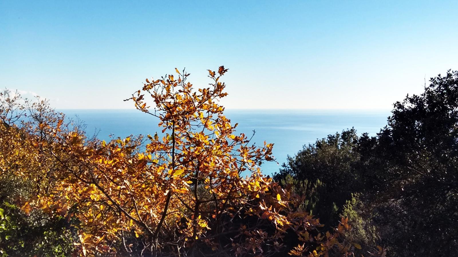 Alzines o roures, arbres més resistents a la sequera que les coníferes