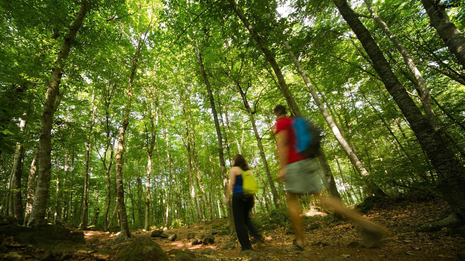 Dues persones passejant pel bosc