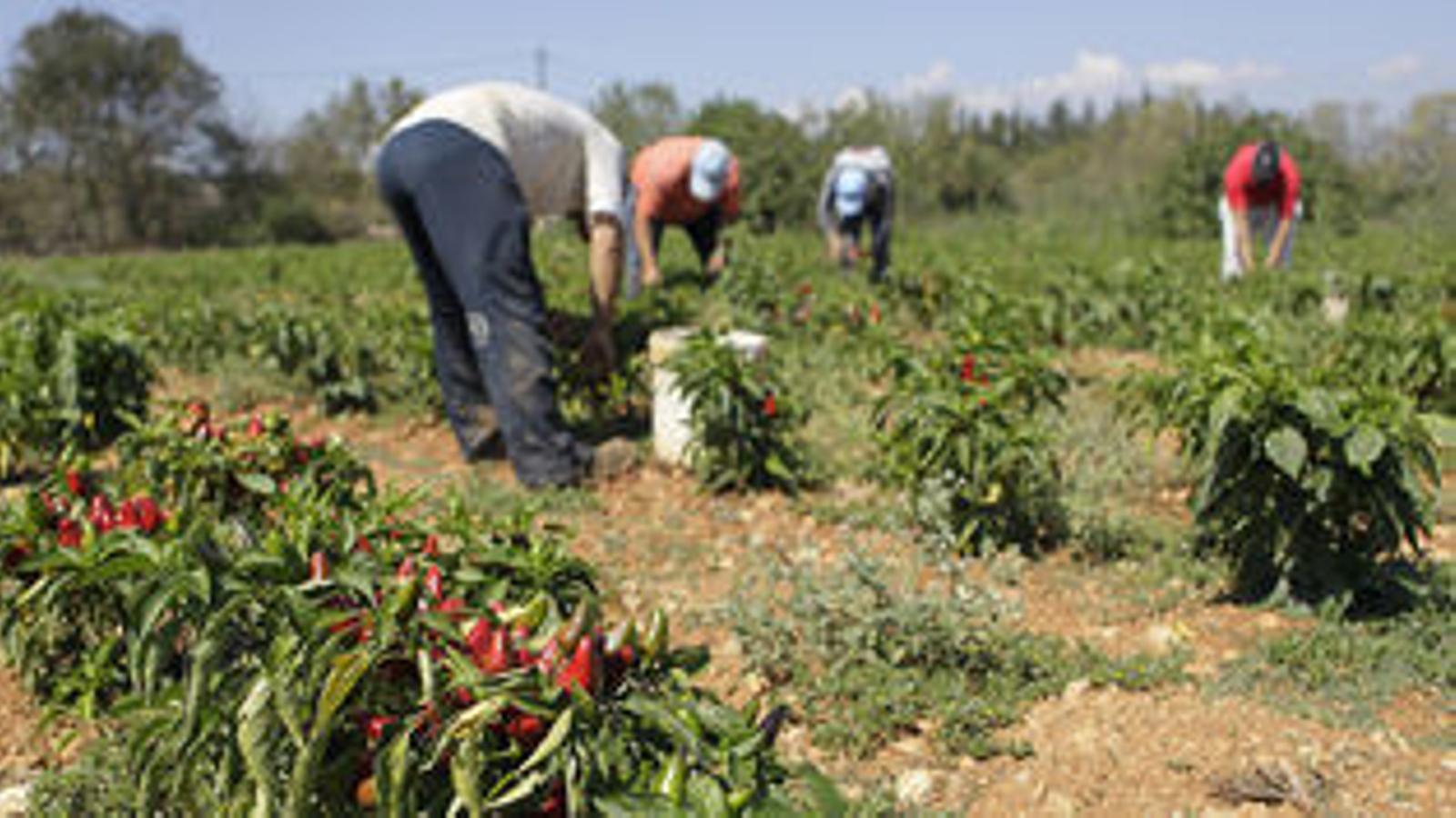 El PP derogarà la Llei Agrària que s'aprova aquest dimarts, si governa