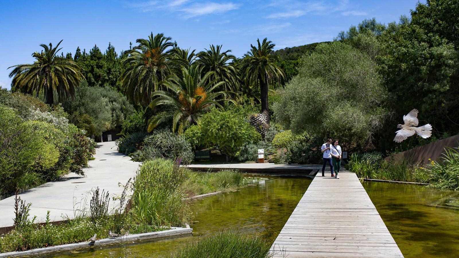 Els tresors amagats  al jardí botànic
