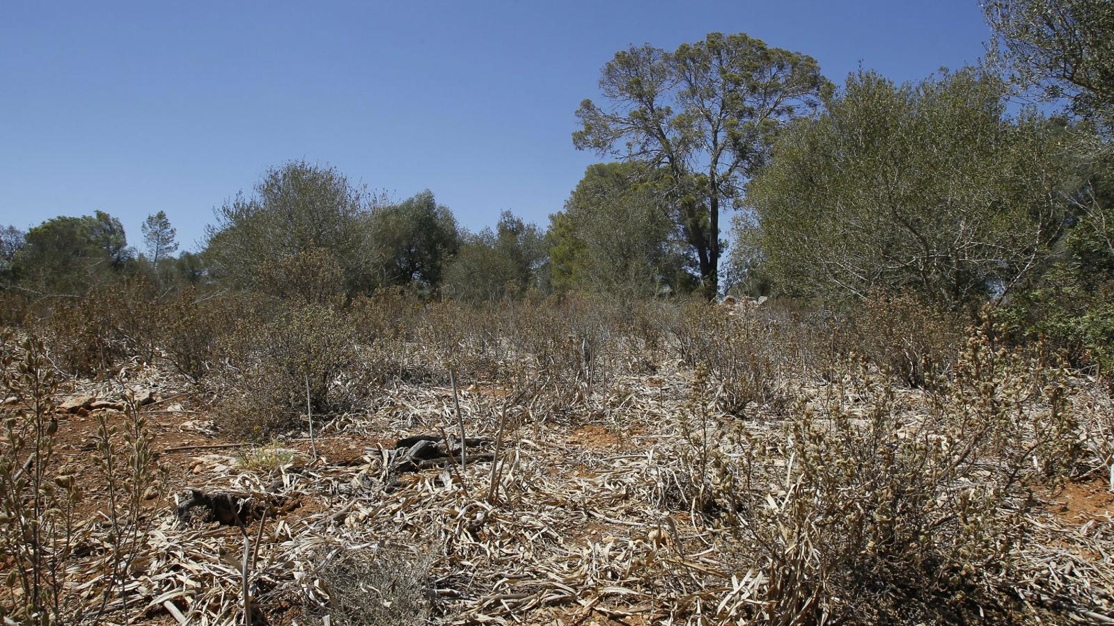 Creix el risc d'incendis i desertització a les Illes