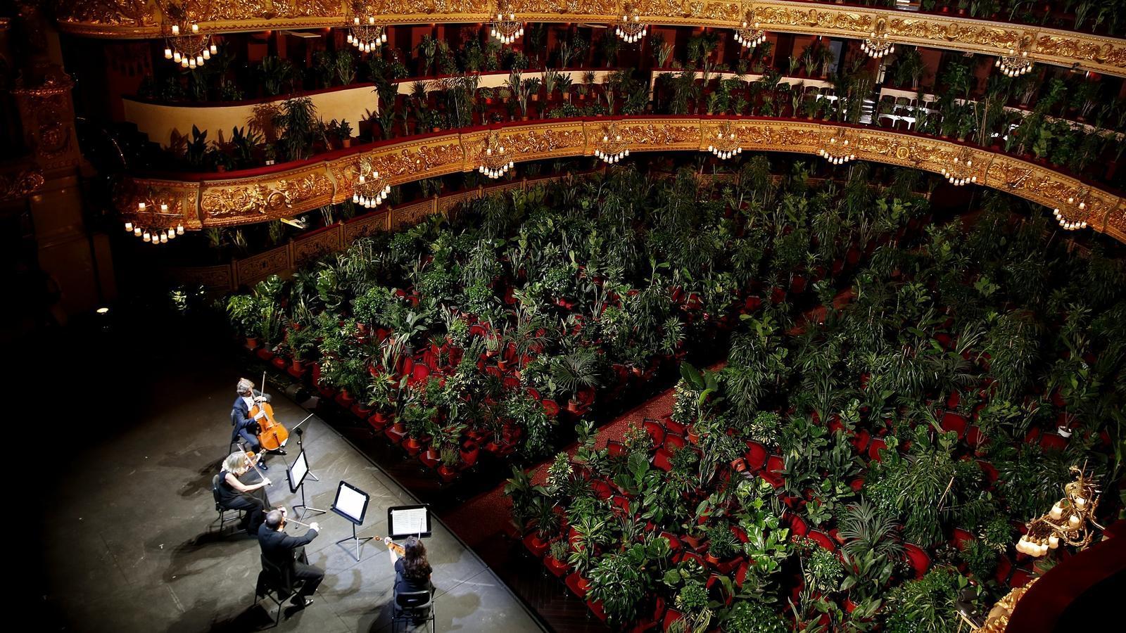 2.292 plantes 'escolten' el primer concert vegetal al Liceu
