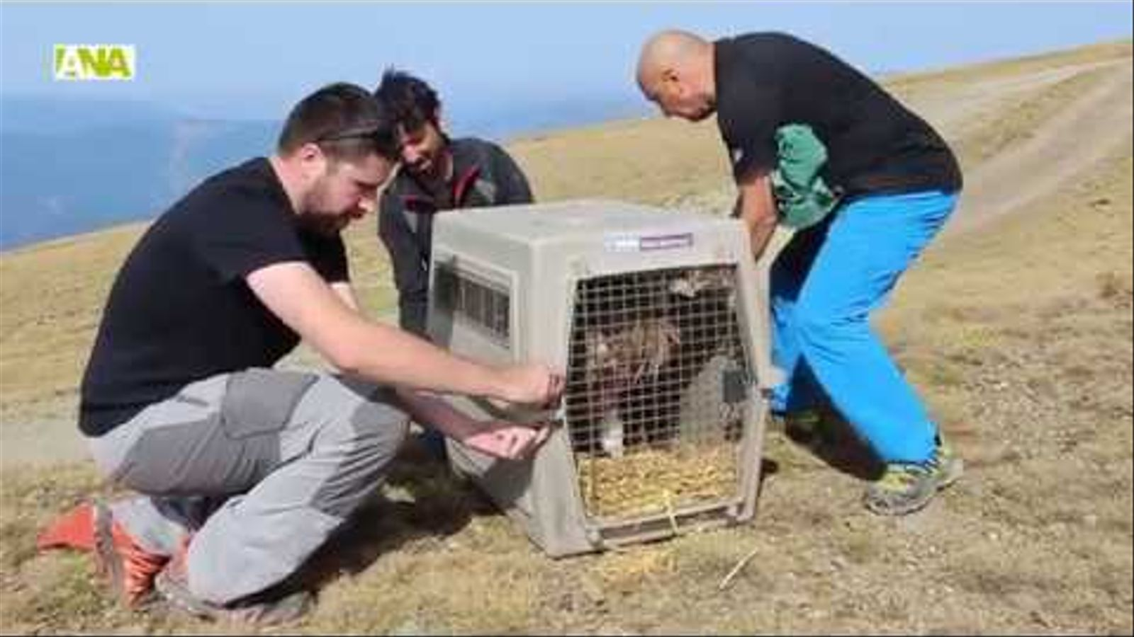 Alliberament d'un voltor recuperat al Pas de la Casa