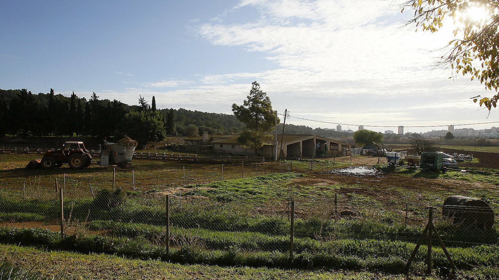 Les construccions agràries no hauran d'adoptar mesures d'integració paisatgística