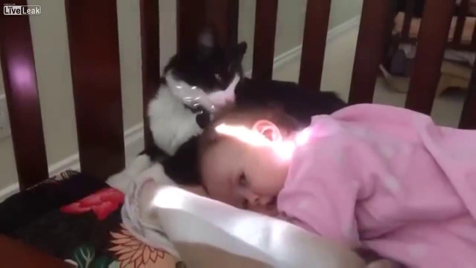 El gat que llepa el cap d'un nen