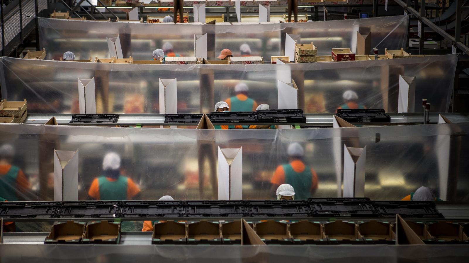 Dones treballadores, moltes d'origen migrant, a la central fruitera de Fruits de Ponent
