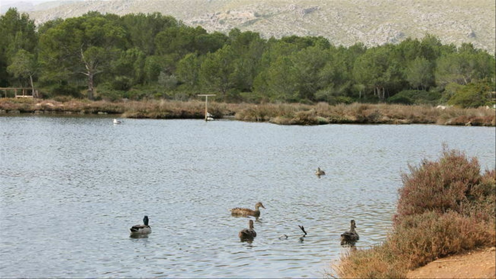 La Reserva Natural de l'Albufereta.
