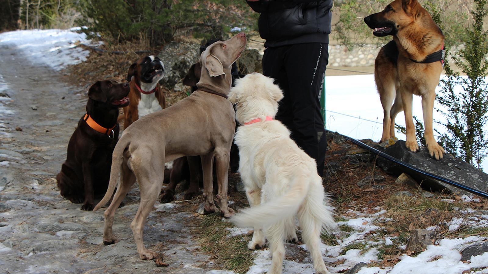 Un cuidador amb gossos. / C. G. (ANA)