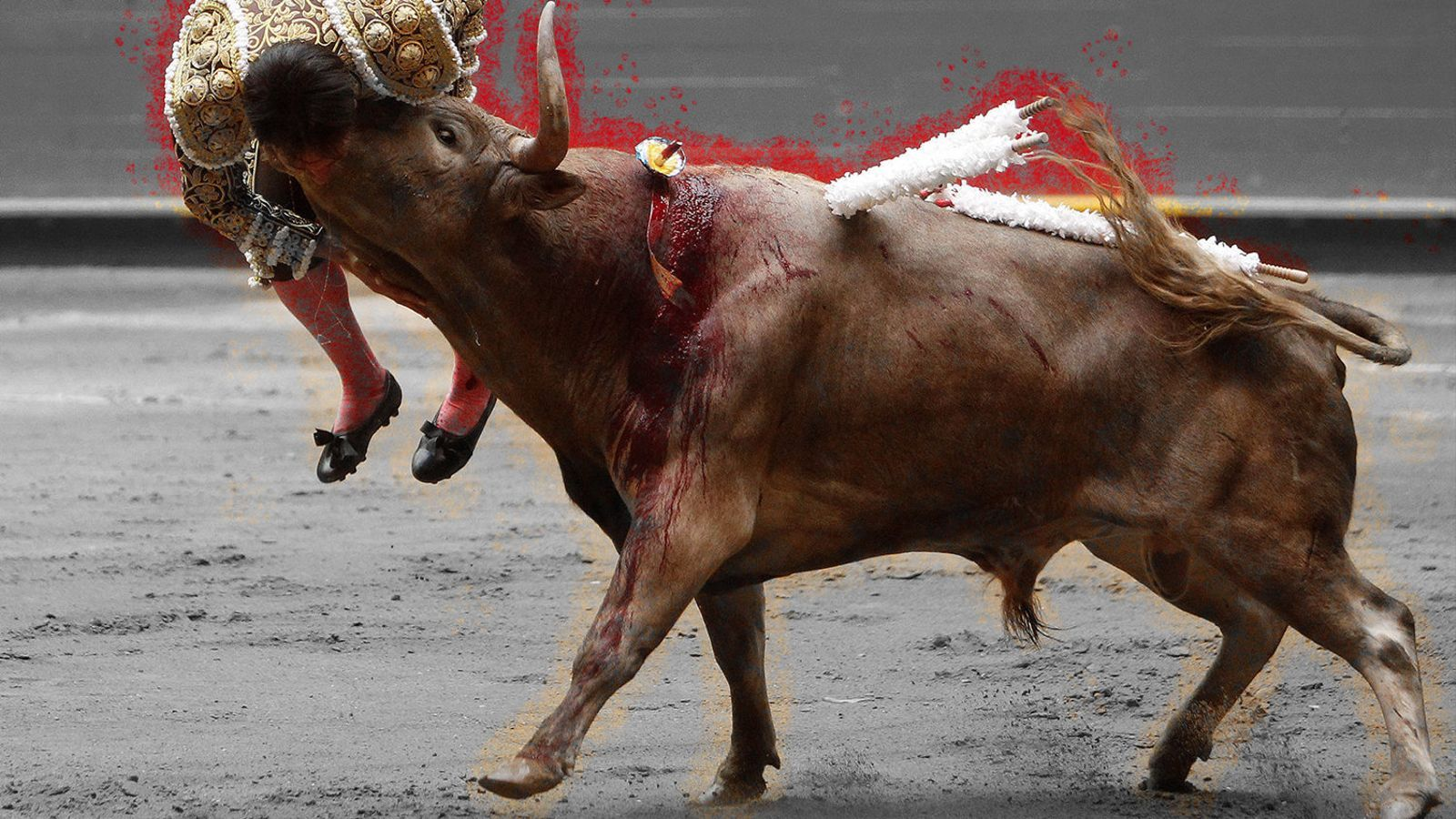 A favor dels toros  (dels animals, s'entén)