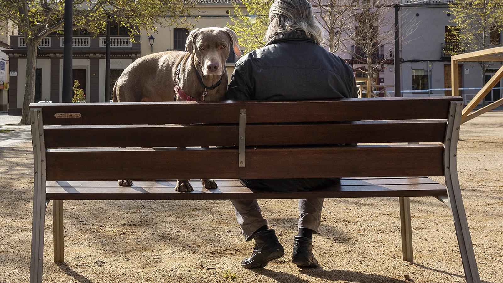 Un home seu a un banc amb el seu gos